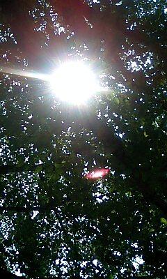中川八幡山公園の木漏れ日