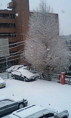 あらら 雪積もってます